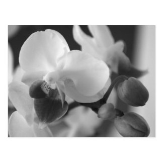 Proverbs 10:12 Orchid Postcard