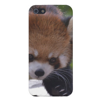 Prowling Red Panda iPhone 5/5S Cover