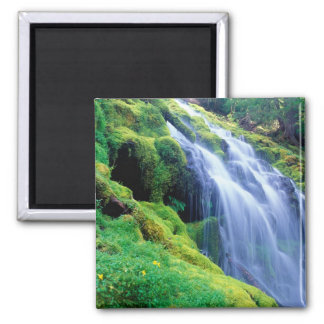 Proxy Falls in the central Oregon Cascades. Square Magnet