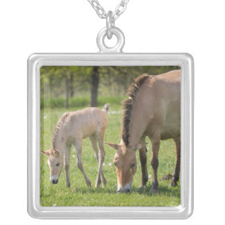 Przewalski's Horse and foal grazing Silver Plated Necklace