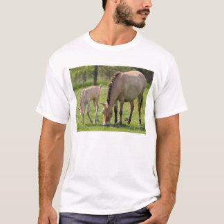 Przewalski's Horse and foal grazing T-Shirt
