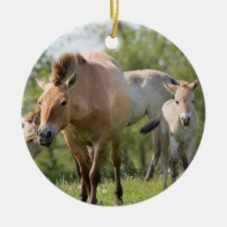 Przewalski's Horse and foal walking Ceramic Ornament