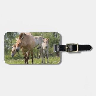 Przewalski's Horse and foal walking Luggage Tag