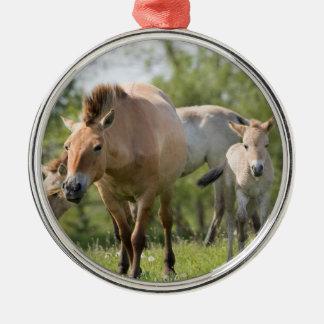 Przewalski's Horse and foal walking Metal Ornament