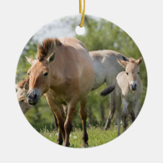 Przewalski's Horse and foal walking Round Ceramic Ornament