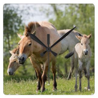 Przewalski's Horse and foal walking Wall Clock