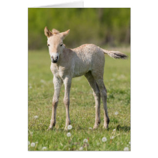 Przewalski's Horse foal, Hungary Card