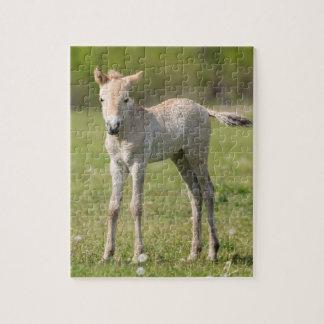 Przewalski's Horse foal, Hungary Jigsaw Puzzle