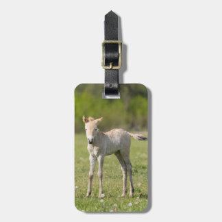 Przewalski's Horse foal, Hungary Luggage Tag