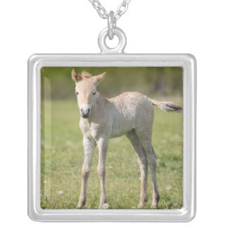 Przewalski's Horse foal, Hungary Silver Plated Necklace