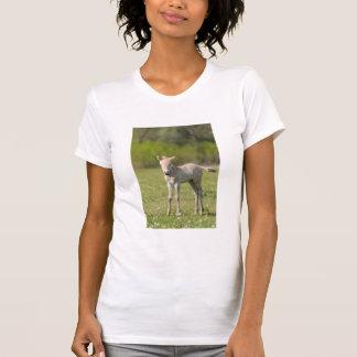 Przewalski's Horse foal, Hungary T-Shirt