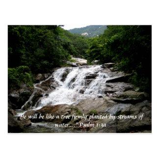 Psalm 1:3a postcard