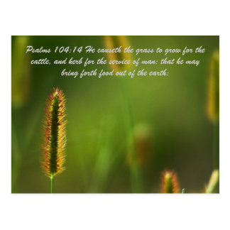 Psalms 104:14 He causeth the grass to grow for the Postcard