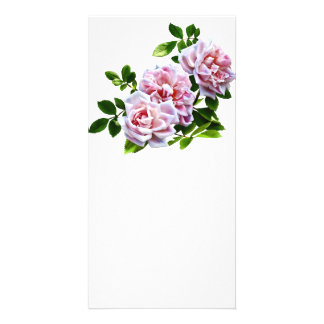 PsThree Pink Roses With Leaves Customized Photo Card