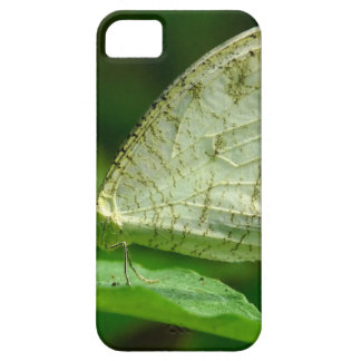 Psyche Leptosia Nina Butterfly iPhone 5 Cases
