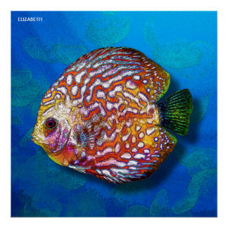 Psychedelic Colorful Exotic Discus Fish Drawing Poster