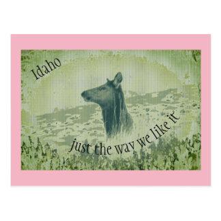 Psychedelic Idaho Elk Postcard