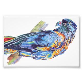 Psychedelic Parrot Australian Cockatoo Print