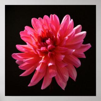 Psychedelic Pink Dahlia Art Karma Fuchsiana Flower Poster