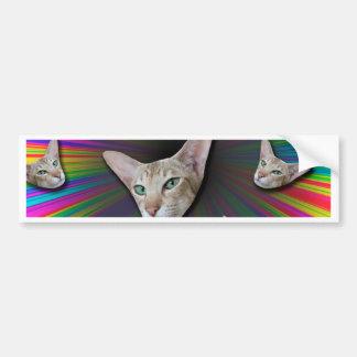 Psychedelic Tye Die Cat Bumper Sticker