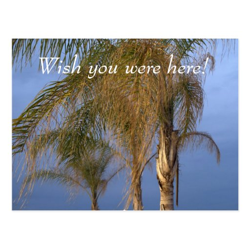 Pt. Pleasant NJ Wish you were here! Palms Postcard Post Cards