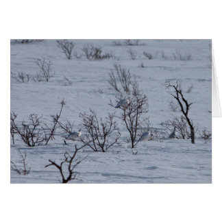 Ptarmigan Family; Customizable Card