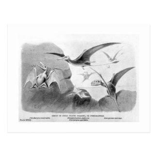 Pterodactyls art postcard