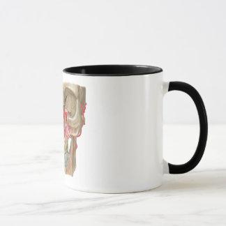 Pterygopalatine Fossa Mug Shot
