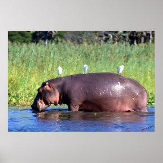 Public Transportation Hippopotamus Portrait Poster
