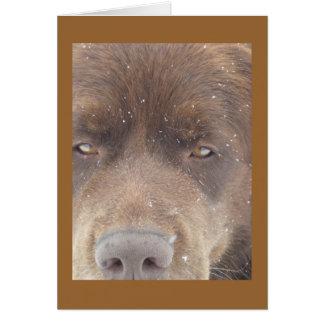Pudge Bear Card