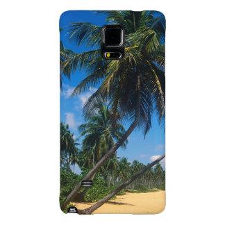Puerto Rico, Isla Verde, palm trees