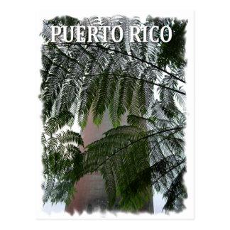 Puerto Rico Rain Forest Postcard