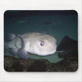 Puffer fish mousepad