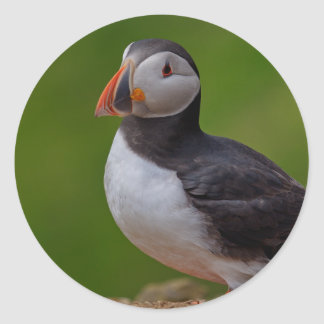 Puffin  B Classic Round Sticker