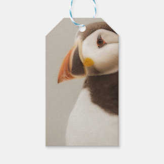 Puffin bird gift tags