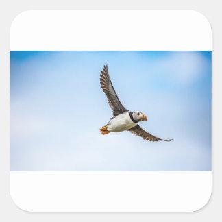 Puffin Bird Sea Flight Wildlife Fly Feather Square Sticker