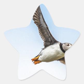 Puffin Bird Sea Flight Wildlife Fly Feather Star Sticker