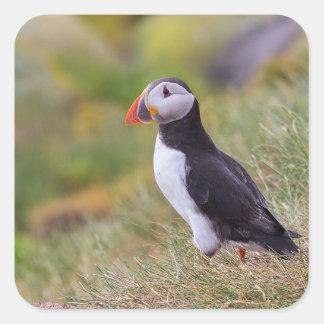 Puffin bird square sticker