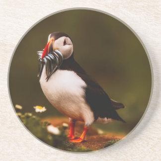Puffin Fish Animal Bird Wildlife Atlantic Island Coaster