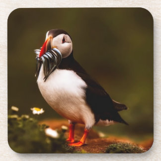 Puffin Fish Animal Bird Wildlife Atlantic Island Coaster