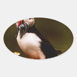Puffin Fish Animal Bird Wildlife Atlantic Island Oval Sticker