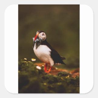 Puffin Fish Animal Bird Wildlife Atlantic Island Square Sticker