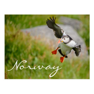 Puffin flying in Norway postcard