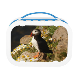 Puffin Lunch Box