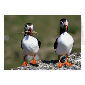 Puffin Pair blank greeting card