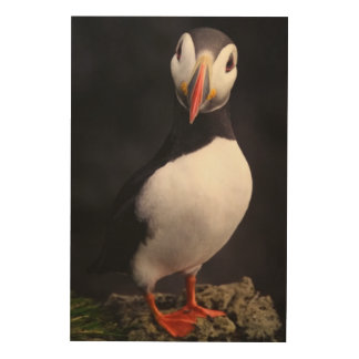 Puffin Wood Wall Decor