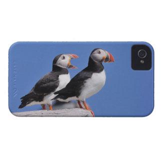 Puffins iPhone 4 Case