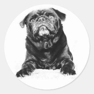 Pug - Black PUG  Black & White Classic Round Sticker