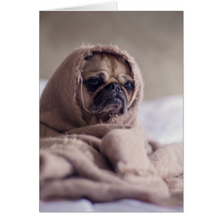Pug blanket - pet pug - cute pugs card