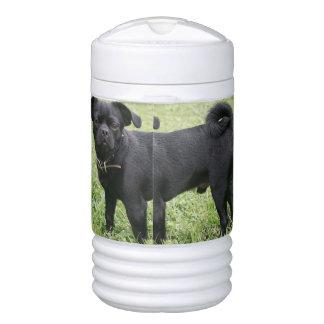 Pug Cooler